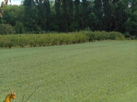 Saint-Hilaire et son agriculture