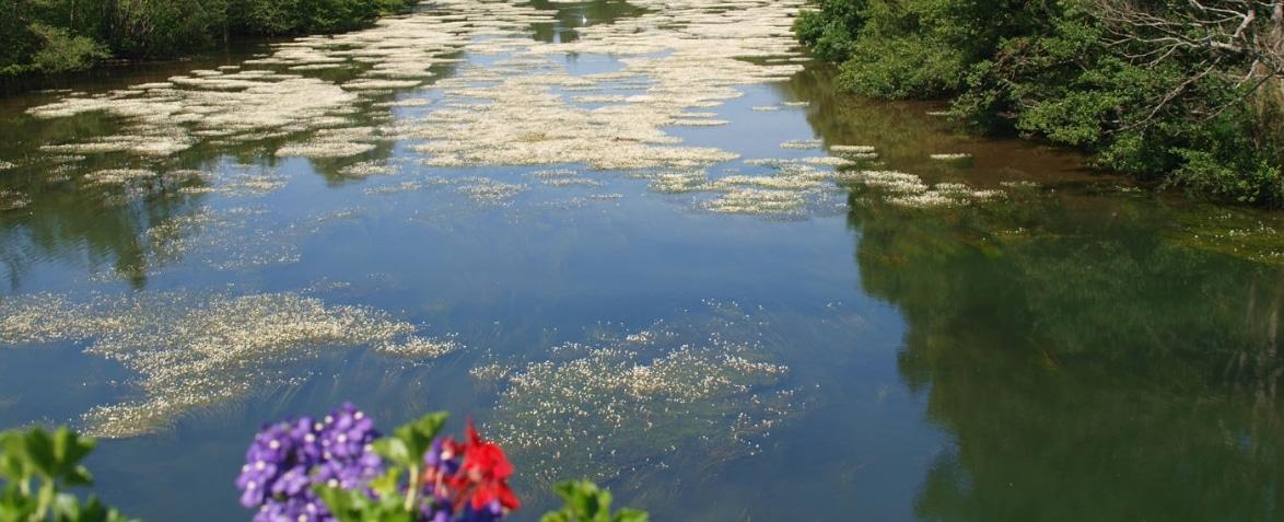 Le Loiret, vu du Pont St Nicolas